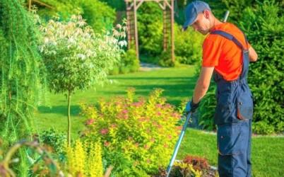 Dísznövénykertész