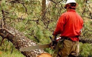 Erdőművelő – Fakitermelő