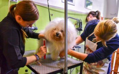 Kutyakozmetikus